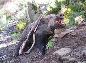 Boar-Feb-2011-800x586
